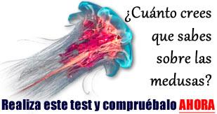 Picaduras de medusas toxicidad y tratamiento  MEDUSAPEDIA